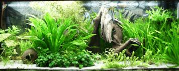 3 Methods To Own Your Unique Fish Tank Backgrounds 2019