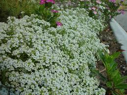 bank little white flowers