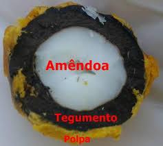 Resultado de imagem para Óleo da polpa de macaúba (Acrocomia aculeata (Jacq) Lood. ex Mart.) com alta qualidade: processo de refino e termoestabilidade