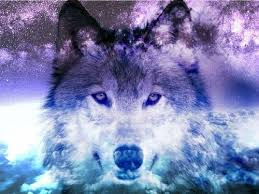 galaxy tumblr hipster wolf. Plain Wolf Wolf Galaxy Tumblr  Recherche Google And Galaxy Tumblr Hipster Wolf Pinterest