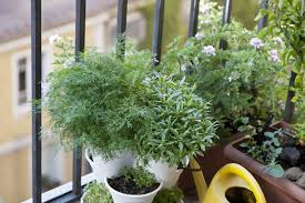 Watering The Plants On A Balcony