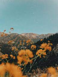 Nature aesthetic, Aesthetic backgrounds ...