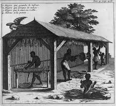 the origins of slavery  the gilder lehrman institute of american  four people working with harvested tobacco in shed