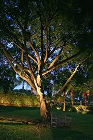 large trees are the royalty of landscape our eyes are imately drawn to them