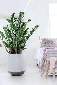 Die Richtige Zimmerpflanze Für Das Schlafzimmer Gogreen