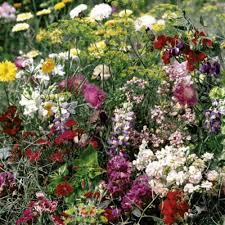 summer long flowering seeds mix