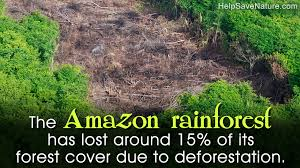 amazon rainforest deforestation. Perfect Rainforest Throughout Amazon Rainforest Deforestation I
