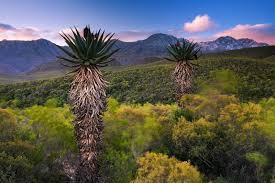 Природа растения и животные Африки Южная Африка