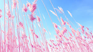 pink desktop backgrounds wallpapers wallpapersafari