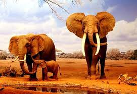 Indian elephant wallpapers HD ...
