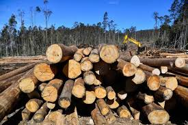 Logging Of Tasmanian Forests Wont Target Wilderness Areas Guy