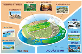 Resultado de imagen de fotos ecosistemas