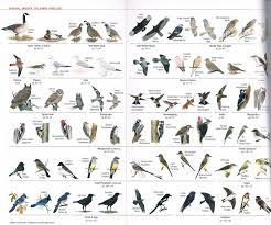 North Carolina Mountain Migratory Birds
