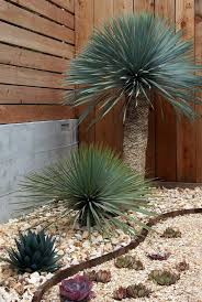 Small Picture Best 25 Succulent rock garden ideas only on Pinterest