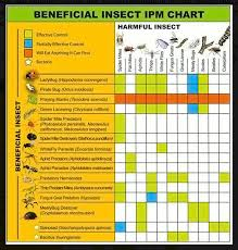 Beneficial Insects Chart Insect Controls Southington Ct Sscgc