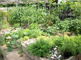 Herb Garden Herb Garden Plants