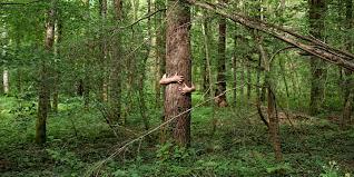 Le Bain De Forêt Comme Thérapie