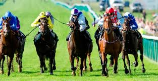 """Résultat de recherche d'images pour """"image de chevaux de course"""""""