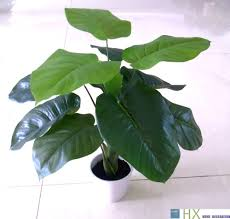 Decorative Indoor Trees Compare Prices On Artificial Indoor Trees Online Shopping Buy Low