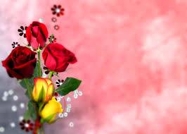 Wallpaper Hd Nature Flower Rose Download