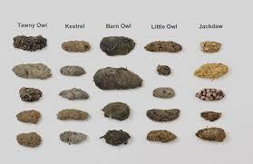 Identification Guide Owl Pellets