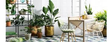 Top10 Indoor Woody Plants