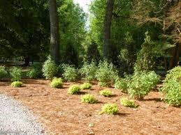 how to landscape a shady yard diy