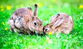 keep rabbits from eating plants keeping rabbits out of the garden how to keep rabbits out