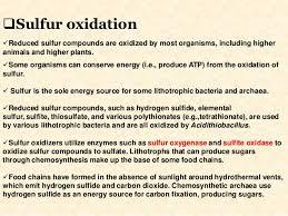 Chemolithotrophy Sulfur Oxidation Metabolism