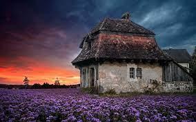 Clouds Farm field flowers house ...