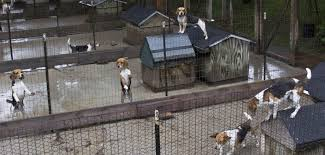 dog owners say montcalm county kennel