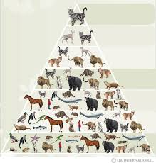 Dog Scientific Classification Chart Species Classification Visual Dictionary