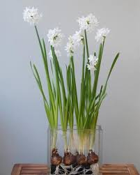 White Paper Flower Bulbs White Paper Flower Bulbs Magdalene Project Org