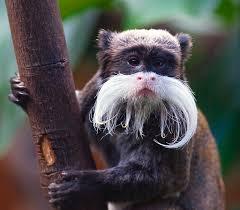 cute amazon rainforest animals. Cute Amazon Rainforest Animals Inside