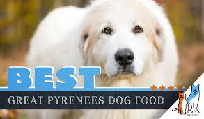 6 Best Great Pyrenees Dog Foods Plus Top Brands For Puppies