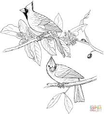 Red Cardinals Coloring Page Supercoloringcom Coloring Crafts