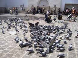 حارة شامية - يا ستيتية الشام..... عندي إلك كلام........   Facebook