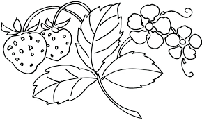 Bouquet Of Flowers Coloring Page Flower Colouring Sheets In Pages