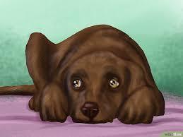Kreuzbandriss beim, hund : Symptome und Behandlung mit und ohne