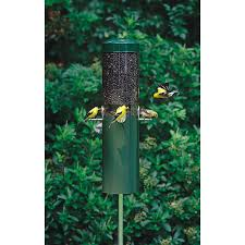 display reviews for steel squirrel resistant 1 2 gallon bird feeder