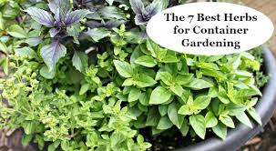container gardening. Learn The Seven Best Herbs For Container Gardening