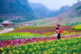 Image result for happy land mộc châu