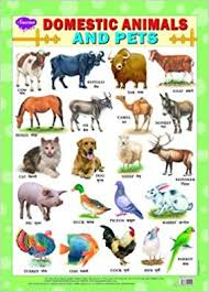 Pet Animal Picture Chart Domestic Animals Pets Chart 43x60 Manoj Publications