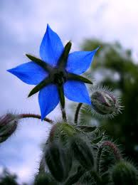 affordable indigo color by indigo blue flower dreamstime xl