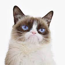 grumpy cat good smile. Plain Good The Official Grumpy Cat With Good Smile O