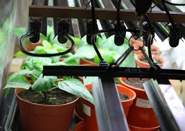 cheap office plants. Like In Life, Being Smart Your Garden Can Save You Big Bucks. For Example, We Know That Even Through LED Grow Lights Are Traditionally Costly Compared Cheap Office Plants