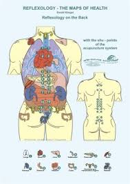 Back Reflexology Chart Reflexology On The Back