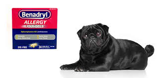 Benadryl For Pugs Is It Safe And How To Use It Safely