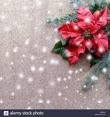 Rot Weihnachtsstern Blume Mit Tannenbaum Und Schnee Auf