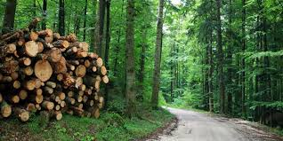 of forest and wild life essay resource conservation of forest and wild life essay resource